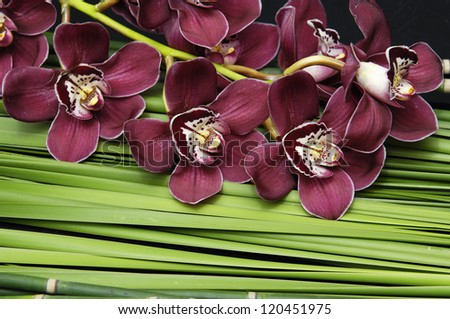gorgeous orchid and stones on bamboo grove and palm leaf texture - stock photo