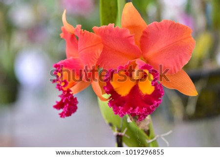 Gorgeous orchid flower on blur background