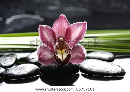 gorgeous pink orchid and green leaf on pebbles - stock photo