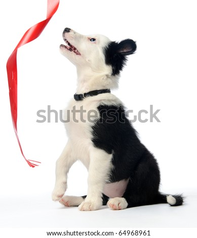 Gorgeous puppy with christmas ribbon - stock photo