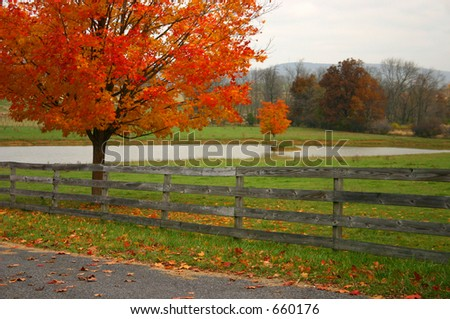 Gorgeous Red tree in the autumn by Fence