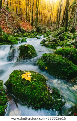 Gorgeous scene of creek in colorful autumnal forest near Bohinj lake Slovenia, Europe.  - stock photo