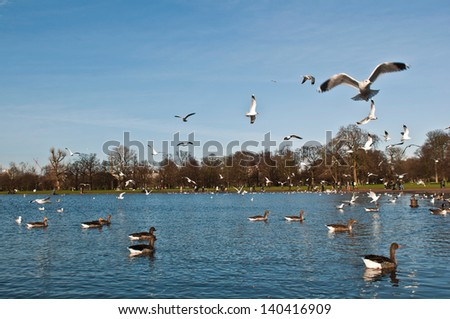 gorgeous scene with ducks and seagulls at Round Pond in Kensington Gardens in London, England