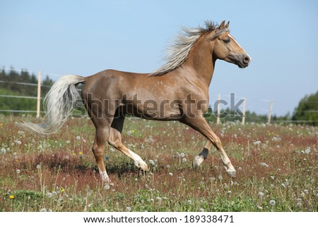 Gorgeous stallion with flying mane running on spring pasturage