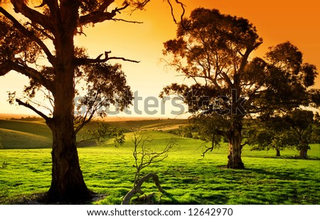 Gorgeous sunset over a lush green meadow - stock photo