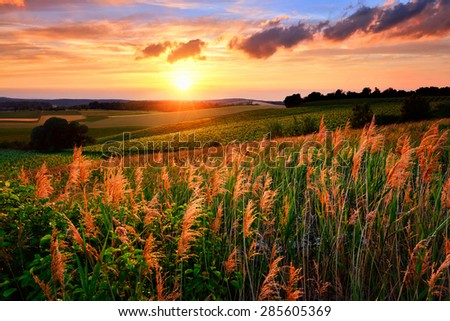 Gorgeous sunset with the sun flooding the landscape's vegetation in red and warm colors, vibrant sky and rural hills - stock photo