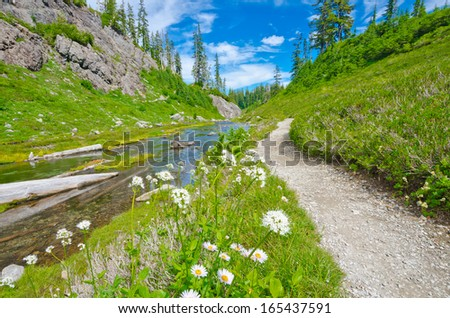 Gorgeous view at the trail and creek with some flowers aside in the mountains.  North America. - stock photo