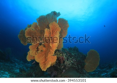 Gorgonian Fan Corals on reef in Similan Islands, Thailand - stock photo