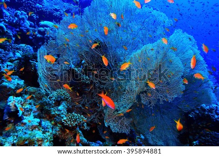 gorgonian on a coral reef - stock photo