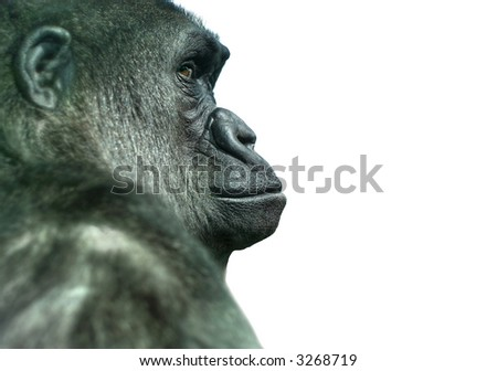 Monkey Man Stock Images Royalty Free Images Amp Vectors