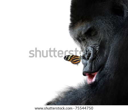 gorilla and butterfly animal friendship - stock photo