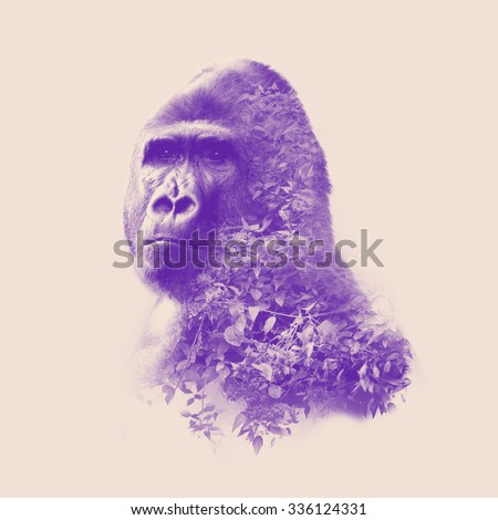 gorilla portrait with double exposure effect - stock photo