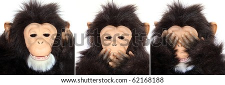 "Gorilla Portraits present popular saying: See no evil, hear no evil, speak no evil"" - stock photo"