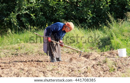 GORNA BELA CRKVA,MACEDONIA - JUNE 23, 2016 : In the villlage of Gorna Bela Crkva , near city of Resen, Macedonia an 83 years old peasant woman digging on  a family field