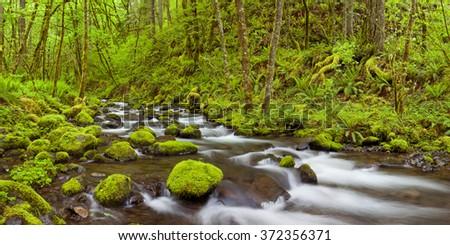 Gorton Creek through lush rainforest in the Columbia River Gorge, Oregon, USA. - stock photo
