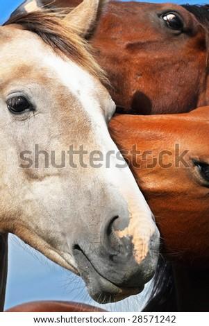 Gossiping horses - stock photo