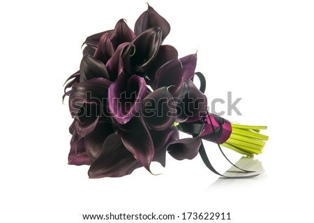 Gothic wedding bouquet with Black Calla Lilies isolated on white background - stock photo