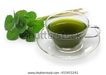 gotu kola, asiatic pennywort, centella asiatica, ayurveda herbal drink - stock photo