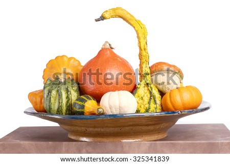 Gourd family. Decorative squashes and pumpkins on plate.  - stock photo