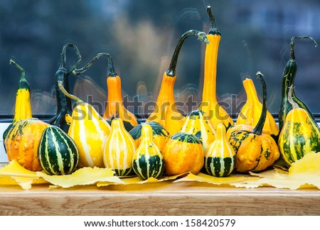 Gourd family waiting for Halloween  - stock photo