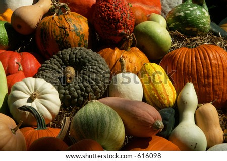 Gourds and Pumpkins - stock photo
