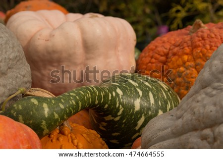 Gourds and Pumpkins on a farmstand table in autumn