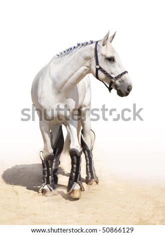 Graceful light grey stallion in full-length - stock photo