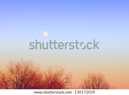 Gracefull nature background - clear blue sky and full moon over tree tops at evening - stock photo