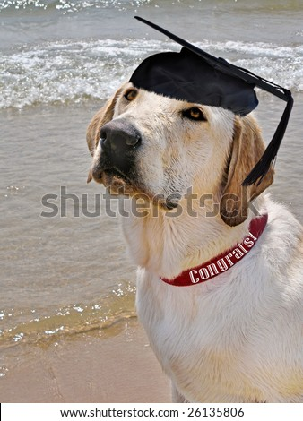graduation cap on pup
