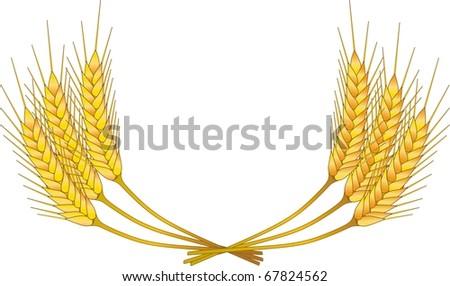 grain - stock photo