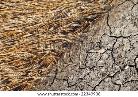 grain and dry - stock photo
