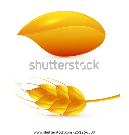 Grain and ear of wheat isolated on white background, illustration. - stock photo