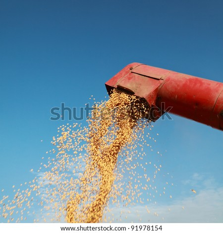 Grain auger of combine pouring soy bean - stock photo