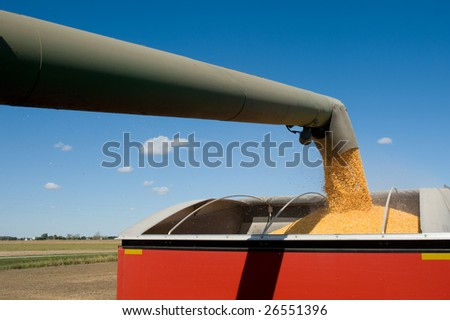 Grain being loaded into a trailer.