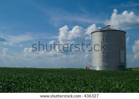 grain bin standing in soybean field with blue sky - stock photo
