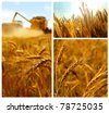 Grain collage - stock photo