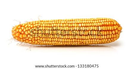 grain corn closeup on a white background - stock photo