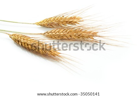 Grain ears - stock photo