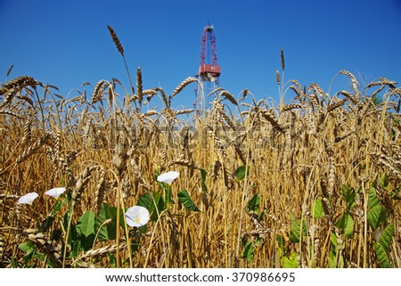 Grain field foreground. Oil rig on the background. - stock photo