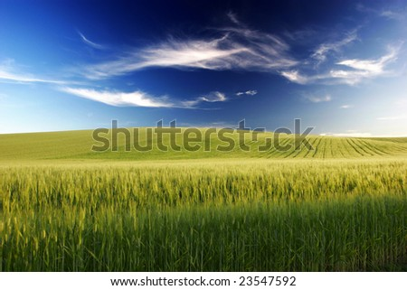 Grain field,raw materials, flour, bread, furnace, feeding - stock photo