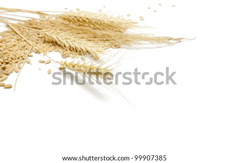 Grain food background. Low aperture shot, focus on ear. - stock photo