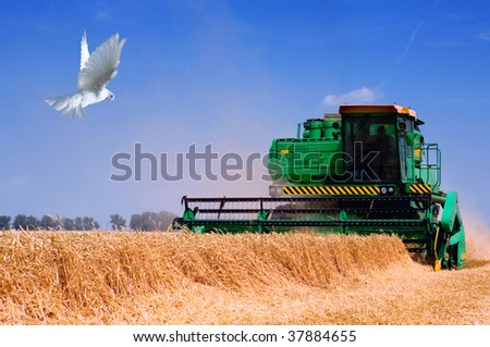 grain harvester combine in the field - stock photo