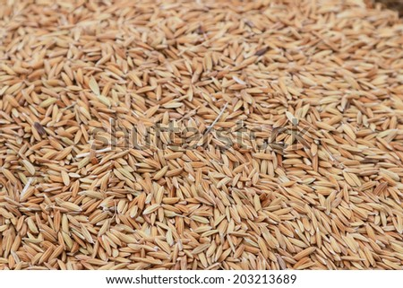 Grain is grain that has not been colored or remove the shell from the seeds. Price is not very high. Peel off, then the price will be high. - stock photo