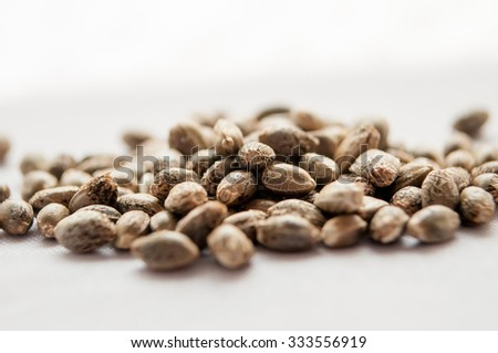 grain marijuana closeup, on a white background - stock photo