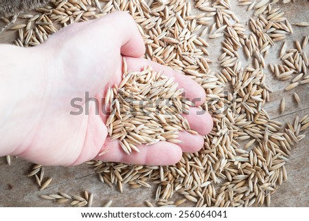grain oats in hand