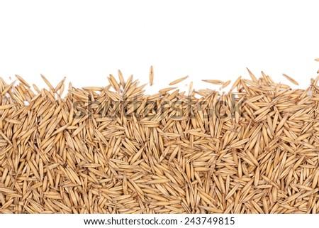 grain of oats on white bakground - stock photo