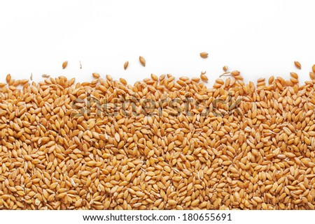 Grain of the wheat on a white background - stock photo