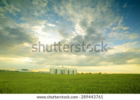 Grain Silos in Corn Field. Set of storage tanks cultivated agricultural crops processing plant. - stock photo