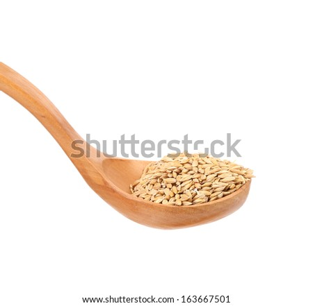 Grains of barley close up. Isolated on a white background. - stock photo