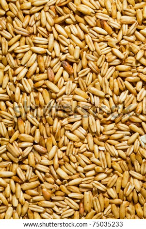 Grains of oats. Yields for crops in agriculture - stock photo